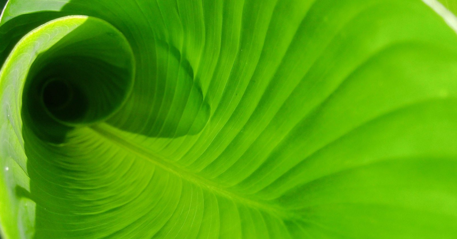 EIC Green Deal