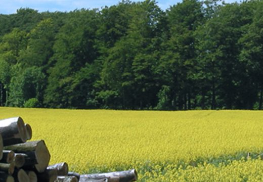 The future of biofuels will be discussed in Brussels on 5th december 2013
